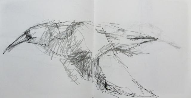 flying gannet 2 sketchbook