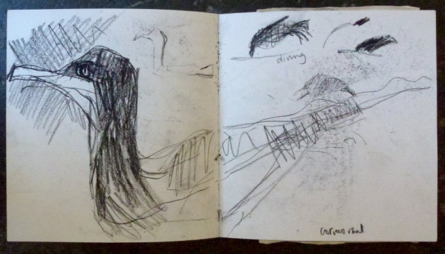 cormorant sketchbook page
