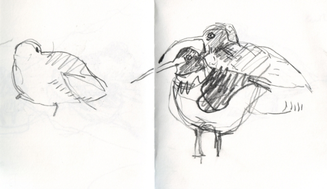 Curlew and oystercatcher sketch