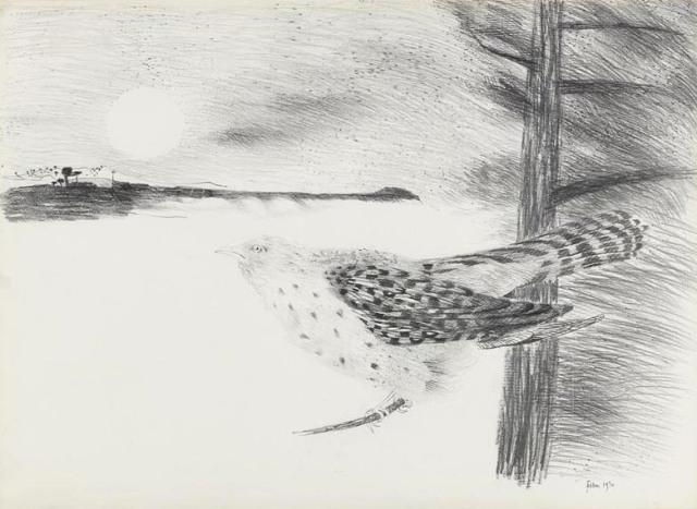 mary fedden cuckoo drawing