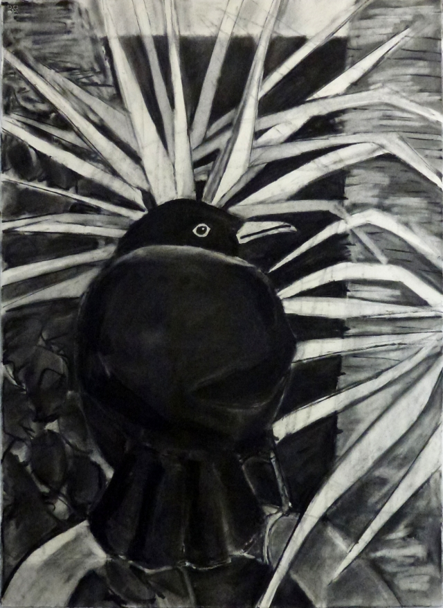 Blackbird in a palm tree, charcoal drawing