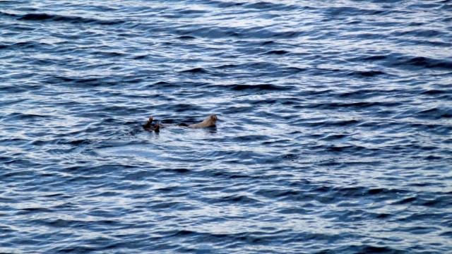 February - loch fyne otter