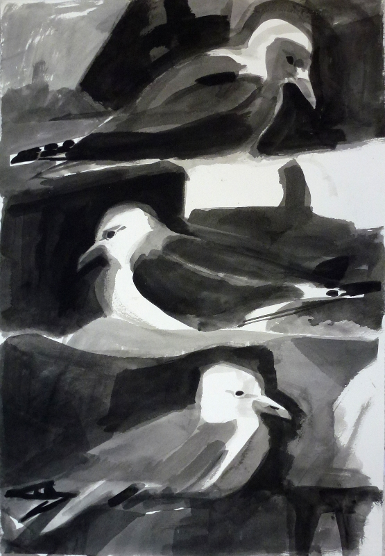 kittiwakes small