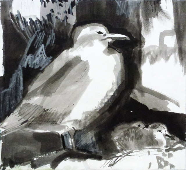 kittiwake and chicks.JPG